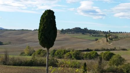 Crazy Tuscan Tree